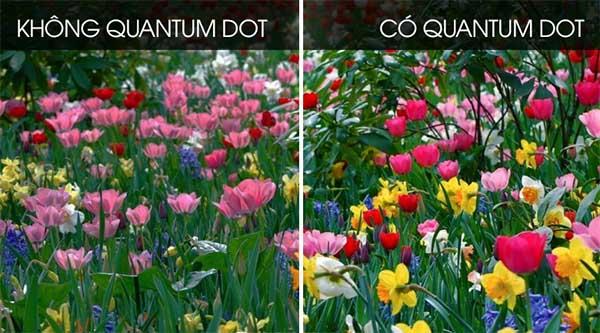 Non quantium vs quantium